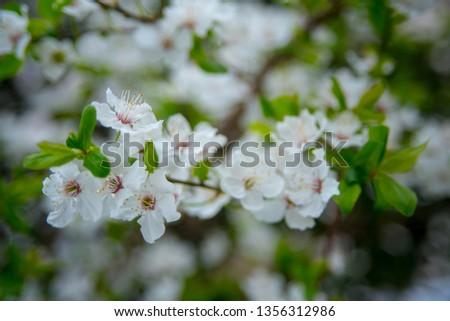 spring spring spring!!! #1356312986