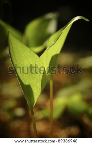 spring sprout of plant growing in the forest