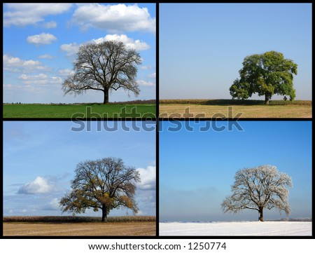 Spring, Summer, Autumn, Winter Stock Photo 1250774 : Shutterstock