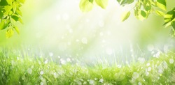 Spring summer background with a frame of grass and leaves on nature. Juicy lush green grass on meadow with drops of water dew sparkle in morning light outdoors close-up, copy space, wide format.