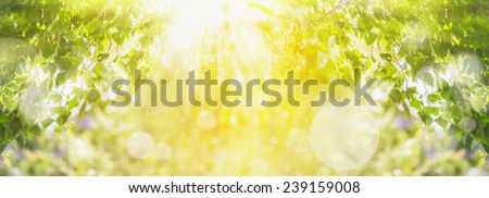 Spring summer background with green tree,sunlight and sun rays, panorama