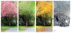 Spring, Summer, Fall and Winter. Four seasons photographed on the same street from the exact same location. Also available in individual high resolution.