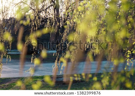 Spring summer natural background. Copy space. Beautiful young birch leaves in the spring in the Golden rays of the sun. Template for design. Template for design #1382399876