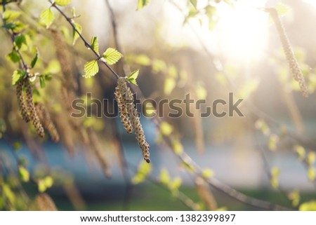 Spring summer natural background. Copy space. Beautiful young birch leaves in the spring in the Golden rays of the sun. Template for design. Template for design #1382399897