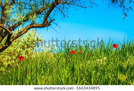 Spring summer nature scene. Summer nature scene. Summer green grass flowers. Summer nature view