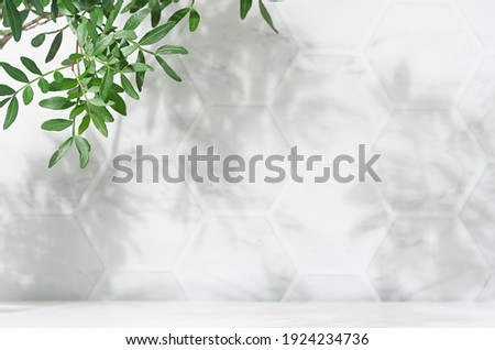 Spring sunlight in green branch of tree with shadow on white marble tile wall,  wood table, copy space.
