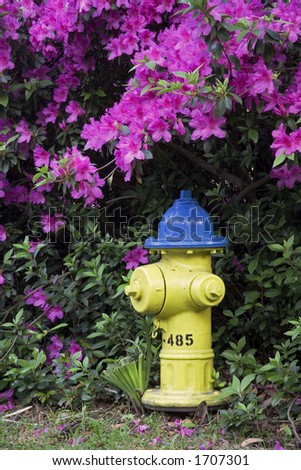 Spring time Azaleas blooming around a fire hydrant the historic district in Savannah Georgia