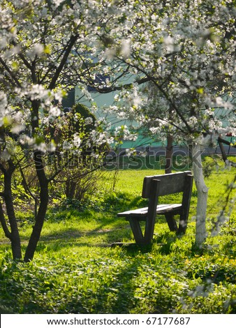 Spring time. Blooming apple trees in park