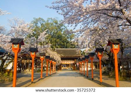 Spring Time in Hirano Shrine, Kyoto, Japan