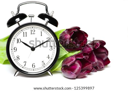 Spring time. Old fashion alarm clock with violet tulips