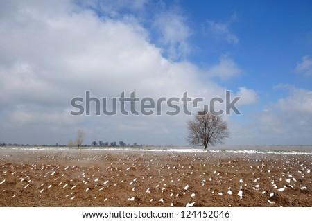 Spring tree alone (four seasons series)\ Whole set (IDs: 73380565, 73380556, 73380559, 124452046)