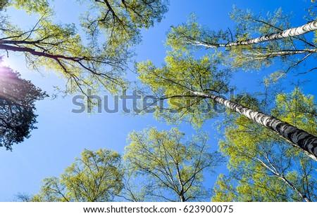 Spring tree tops sky landscape #623900075