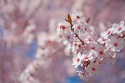 Spring. Tree with flowers, bee and butterfly