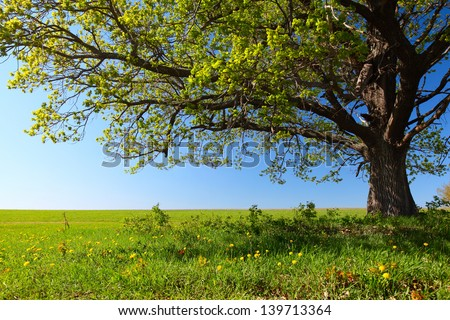Spring tree with fresh green leaves on a blooming meadow #139713364