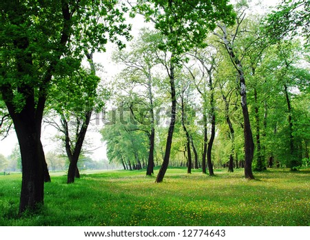 Spring Trees Stock Photo 12774643 : Shutterstock