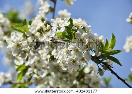 Free Photos Spring Trees Blossom Magnolia Blossoms Magnolia