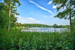 Spring trees surrounding Rufford Park lake. Bank side with shrubbery and green grasses
