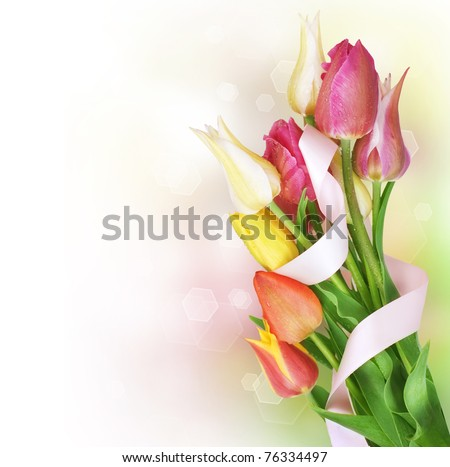 Spring Tulip Flowers bunch