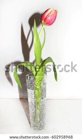 "spring tulip isolated spring tulip isolated spring tulip isolated spring tulip isolated ""spring ""tulip ""isolated ""spring ""tulip ""isolated ""spring flower ""spring flower flower spring"" flower spring""  #602958968"