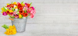 Spring tulips and daffodils with bucket and decoration on wood