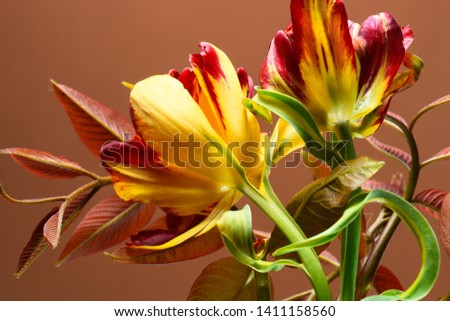 spring tulips and foliage on a dark beige background. #1411158560