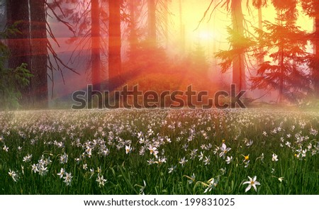 Spring turning into a very beautiful time of year, when they begin to blossom on the background of bright colors in sunrises sunsets. Manufacturers calendars artists photographers appreciate this time