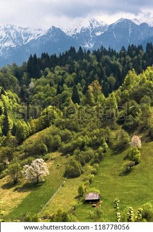 Spring vertical landscape of Moieciu valley