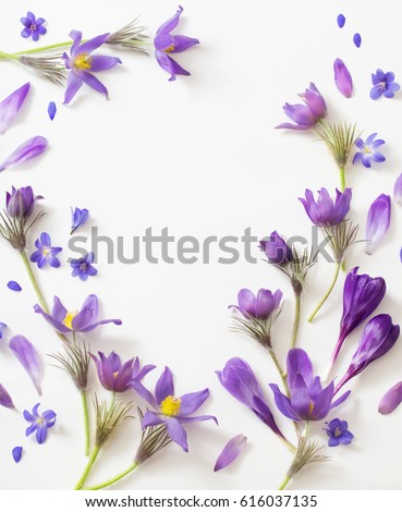Spring violet flowers on a white background