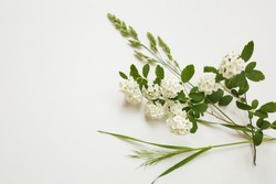 Spring white flower blossom and green wild grass bush on white isolated background. Blooming white background. Copy space. Top view. Wallpaper