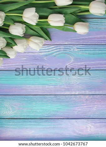 Stock Photo Spring white tulips flower on color wooden background. Tulip, gardening concept. Top view, copy space for your text.