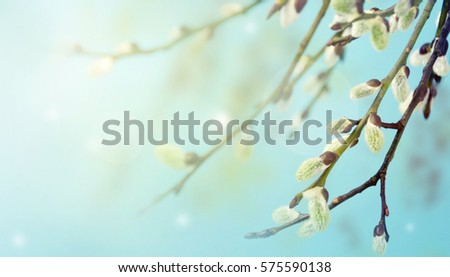 Spring willow branches on earrings on a pastel background.