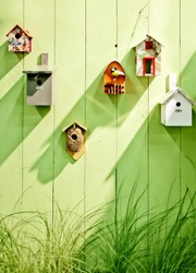 spring wooden wall