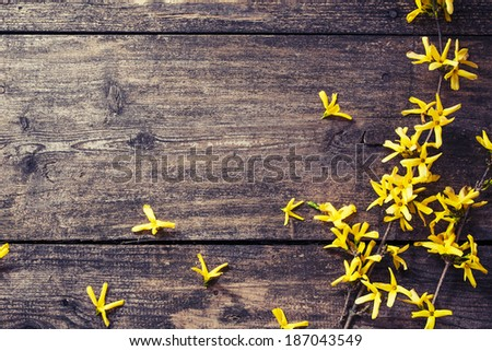 Spring Yellow flowers on wooden background