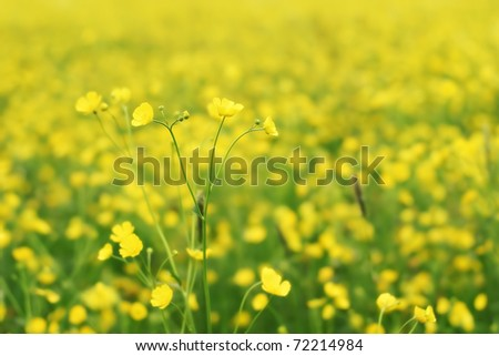 Springflowers in a Field shallow on a sunny day