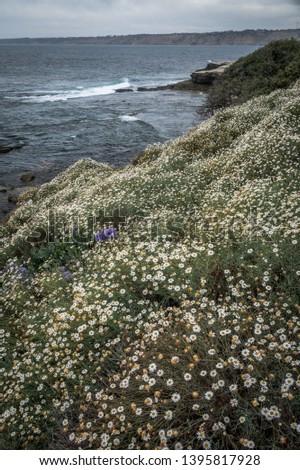 Springtime along the San Diego California Coastline #1395817928
