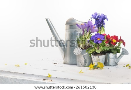 springtime flower in metal watering can on white table