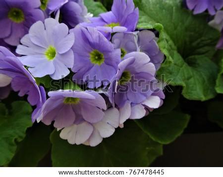 Free photos purple flower with yellow center avopix springtime flowers bluepurple flower with yellow centre 767478445 mightylinksfo