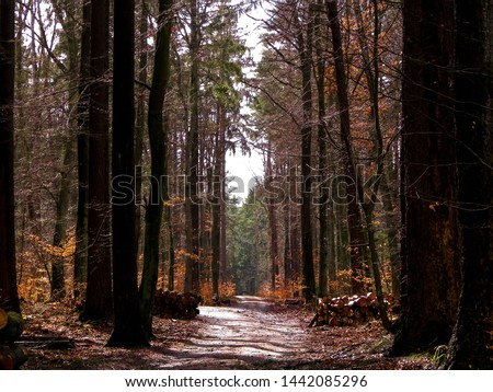 Springtime, forest awakens again after the winter break. The spring sun breaks through the trees on the path in forest. Nature concept.