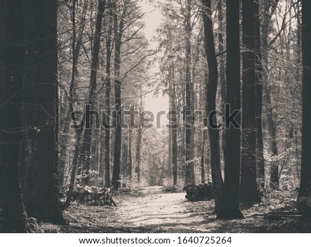 Springtime, forest awakens again after the winter break. The spring sun breaks through the trees on the path in forest. Nature concept. BW filter toned.
