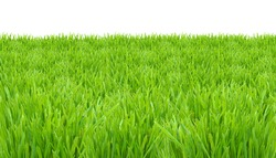 Springtime, fresh green grass lawn isolated on white background