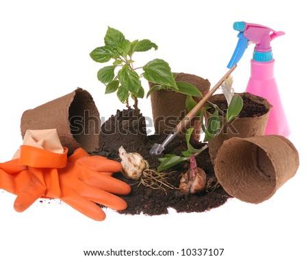 springtime  home gardening- potting plants  in peat pots