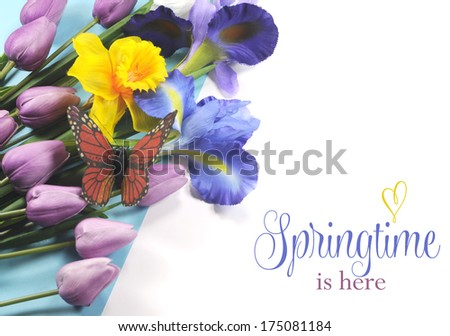Springtime is Here sample text on white background with blue, white and purple silk iris, yellow daffodil, pink mauve tulips and monarch butterfly. #175081184