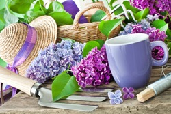 Springtime Lilac and gardening