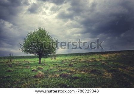 Springtime.Lonely growing apple tree on a background of dark storm clouds.Cloudy spring morning.Overcast sky.