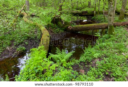Springtime look of natural deciduous stand with little stream crossing and dead tree lying over