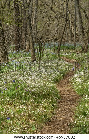 Springtime Path Through Bull Run Regional Park, Fairfax, VA During the Virginia Blue Bell Bloom Vertical