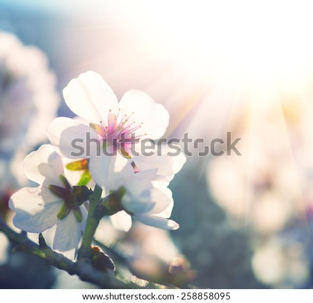 Springtime. Spring flowers blossom background. Beautiful nature scene with blooming tree and sun flare. Sunny day. Beautiful Orchard #258858095