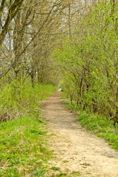 Springtime tunnel dirt road landscape. Bushes with green foliage forming a natural tunnel around the dirt road at the parkland.
