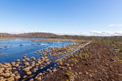 Springy, squishy, damp freshwater lake layered with a mesh of moss in a Latvian peat bog. View from tower to peat moor covered with blue water, bog plants and bog earth