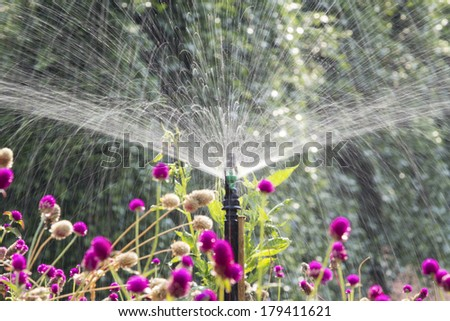 Sprinkler head watering the flowers in garden